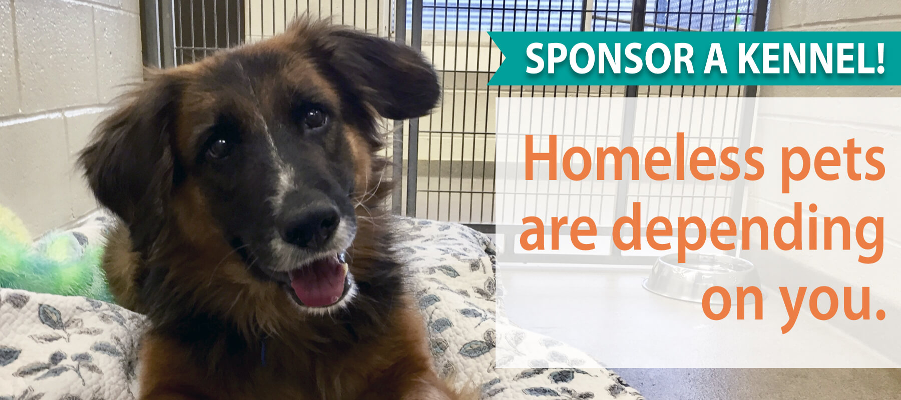 Put your business front and center with a Kennel Sponsorship, and provide a homeless animal with a place to rest while waiting for a forever home.
