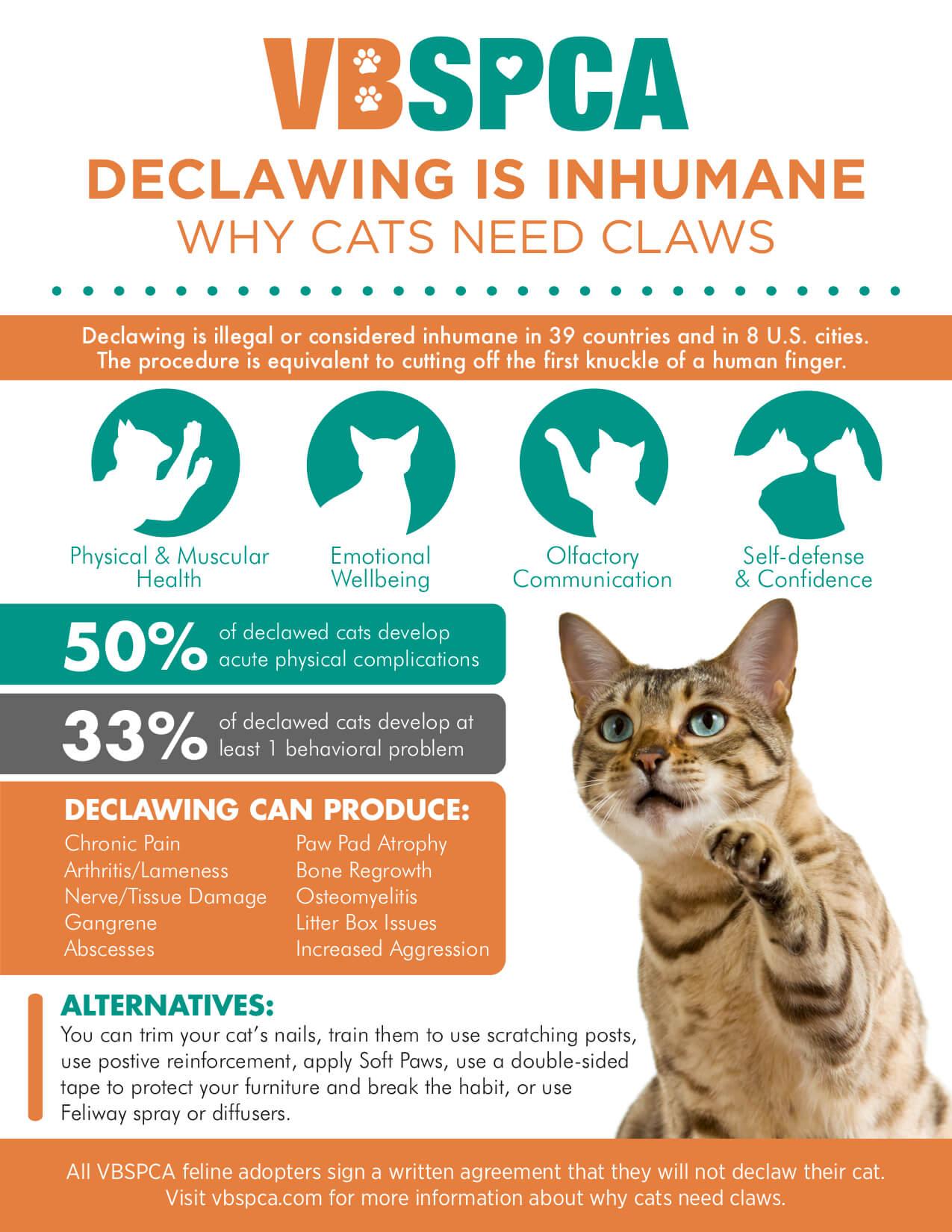 Cats Need Claws Virginia Beach Spca